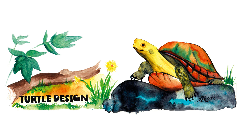 Turtle_Design_Illustration_1365x910px